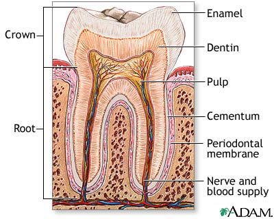 Essay On Cleanliness Of Teeth - image 11
